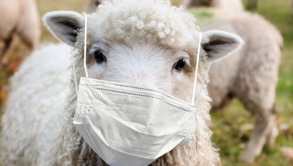 Responding as rational sheep: a theological reflection on COVID-19